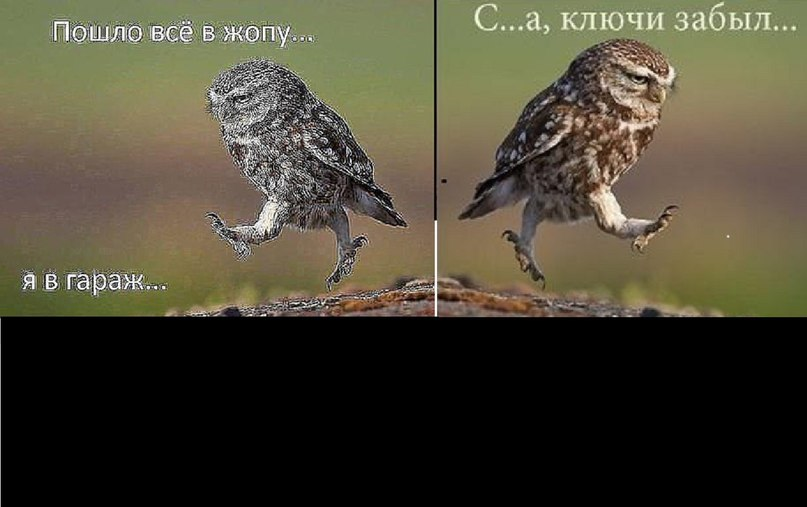 Пожеланием благословенный, ой все картинки сова