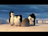 Пингвины Мадагаскара - Пингвины Антарктики