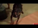 Самое смешное видео с животными! Лучшая подборка приколов!
