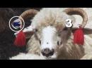 Вурда Урда овечий сыр