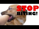 STOP your puppy BITING - puppy dog training