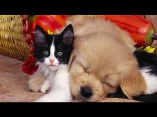 Funny and Cute Pets Making Fun - Cute Cats and Dogs Compilation [April 2015 Edition]