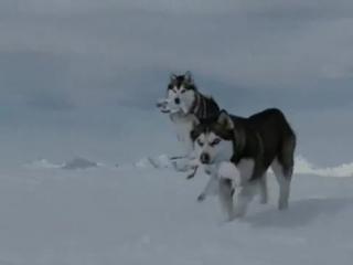 Клип про любовь и преданность собак Из фильма Белый плен