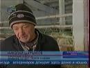 Staroetv / Время новостей (ОТВ, декабрь 2008) Суррогатное животноводство в Брединском районе