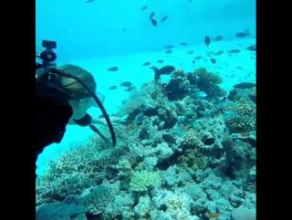 Я очень боюсь рыб любого размера... Сегодня я переборола свой страх и отправилась в подводное путешествие. Как только я с инстру