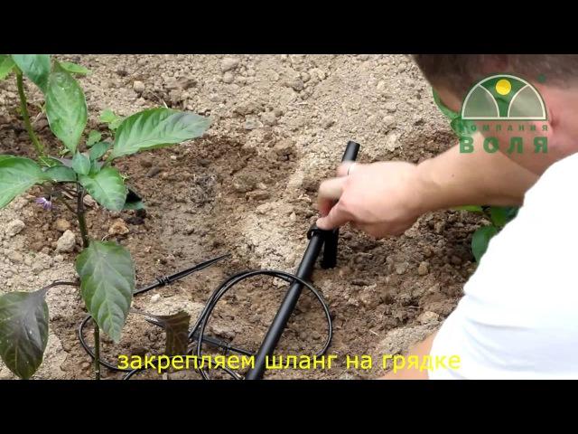 Видео инструкция установки системы капельного полива Водомерка от Компании ВОЛЯ