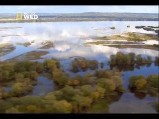 Жизнь орлов на Миссисипи -из фильма Дикая природа Миссисипи-Холода