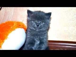 Кошка смешно нападает на ребенка КОШКА-НИНДЗЯ!!! Приколы с котами и кошками!!!