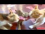 Коты пугаются, скачут, орут. Смешно до слез)))