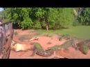 Crocodile bites foot off another crocodile