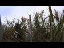 Охота на уток осень 2014