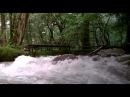 Цвет рая. Rang-e khoda (1999)