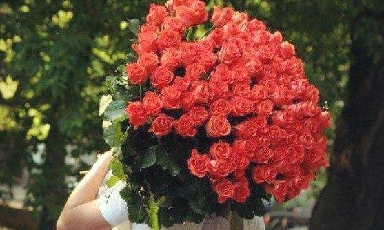 Роза 45 50 см