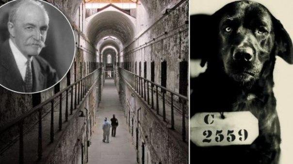собака, которая была приговорена к пожизненному заключению он был известен как пенсильванский убийца-кошек и был приговорен к пожизненному заключению в тюрьме штата восточная за ужасное убийство