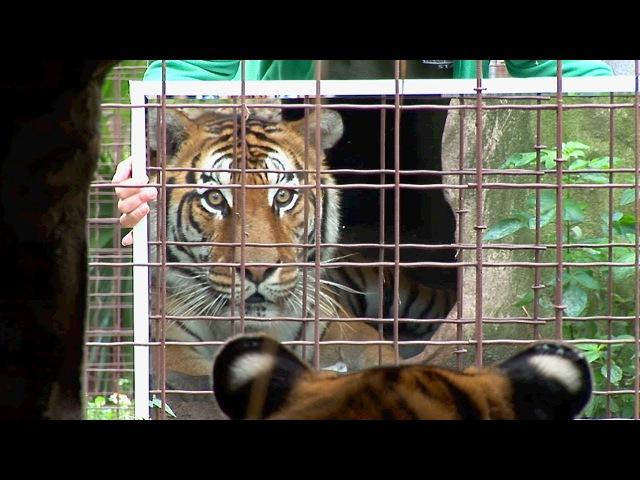 Big Cats Mirrors = Funny!