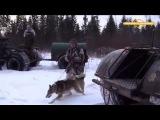 Охота на лося в вологодской области Охотничьи истории