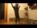 Смешные коты. Funny cats(часть 2)