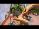 Орхидея Реанимация орхидеи Один из способов orchid rehabilitation