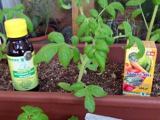 Время выращивания рассады  Как приготовить Байкал ЭМ 1