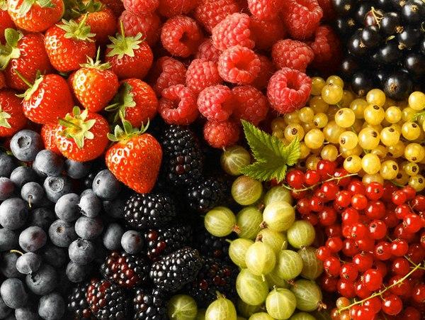 Лекарственные травы и ягоды.