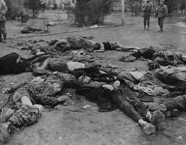 Погибшие узники концлагеря Ордруф. . 1945 год.