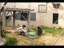 Гении животного мира