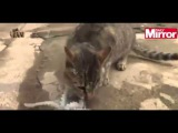 Cat vs octopus: Furry feline meets its match in 8-legged sea creature
