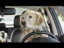 Subaru Dog Tested Commercial