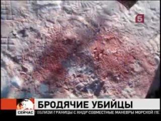 Бродячие собаки загрызли 10-летнюю девочку 21.02.2011 Омск