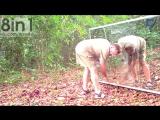 Реакция диких животных на зеркало в джунглях / Animals in Mirrors Hilarious Reactions