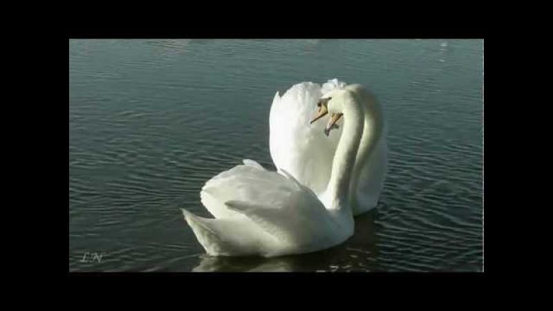 Весна... Ф. Лист - Утешение - Ferenc Liszt