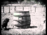 Фильм Держи вора! (James Williamson, 1901)
