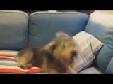 Как чихают разные животные