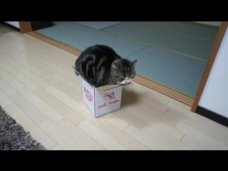 когда ты толстый кот и хочешь поместиться в коробку )))