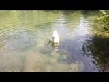 Крым. Лебедь-перевертыш в парке Воронцовского дворца