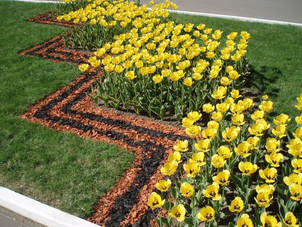Коломна, Более 200 тыс штук цветочной рассады взошли в теплицах Коломны
