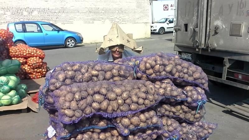 Разведчик-картофельник