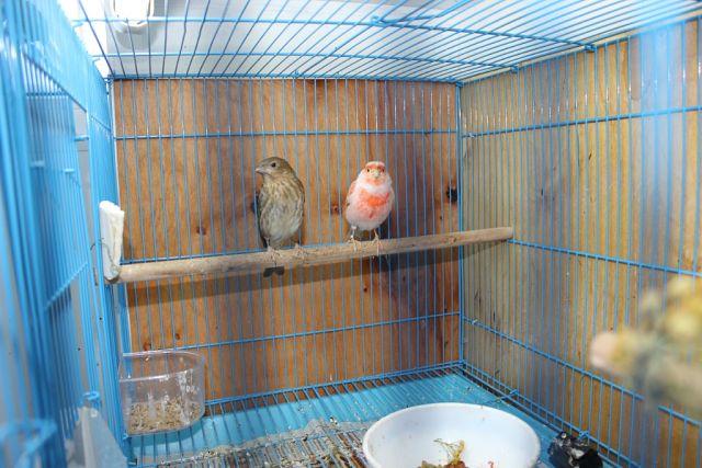 "Фотографии ""птичей комнаты""  MEcLF3qTSIw"
