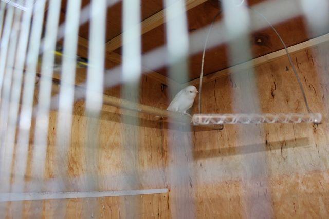 """Фотографии """"птичей комнаты""""  M1dXqAetd8I"""