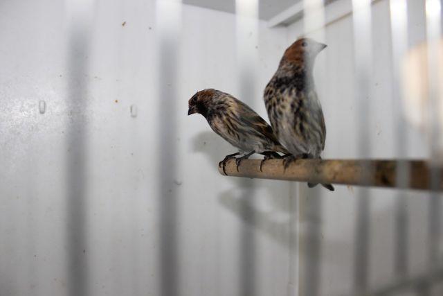 """Фотографии """"птичей комнаты""""  BsMxUeYTMBA"""