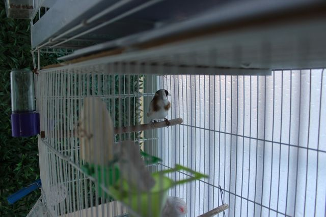 "Фотографии ""птичей комнаты""  E1LCM1jqNoM"