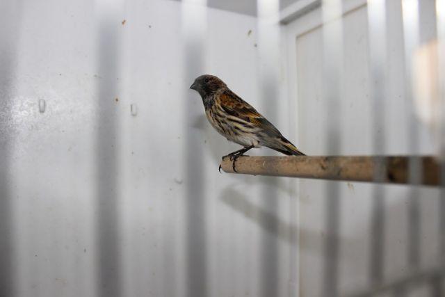 """Фотографии """"птичей комнаты""""  9CVfBaQWzcQ"""