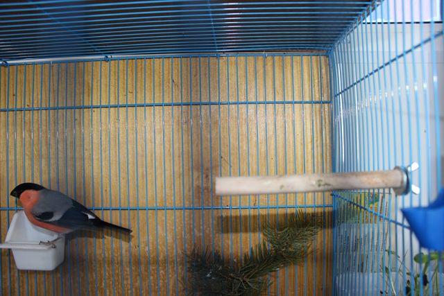 "Фотографии ""птичей комнаты""  DS7MsAZFExw"