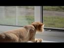 Кот повторяет за птичкой