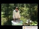 десять главных ошибок пчеловода