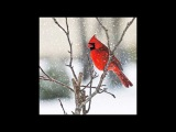 Molly Johnson - Red Cardinal