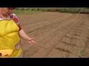 Высаживаем рассаду лука порея Легко