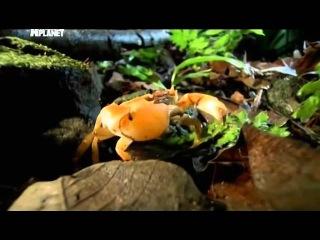 Войны жуков-гигантов / Monster bug wars Кровь на поляне