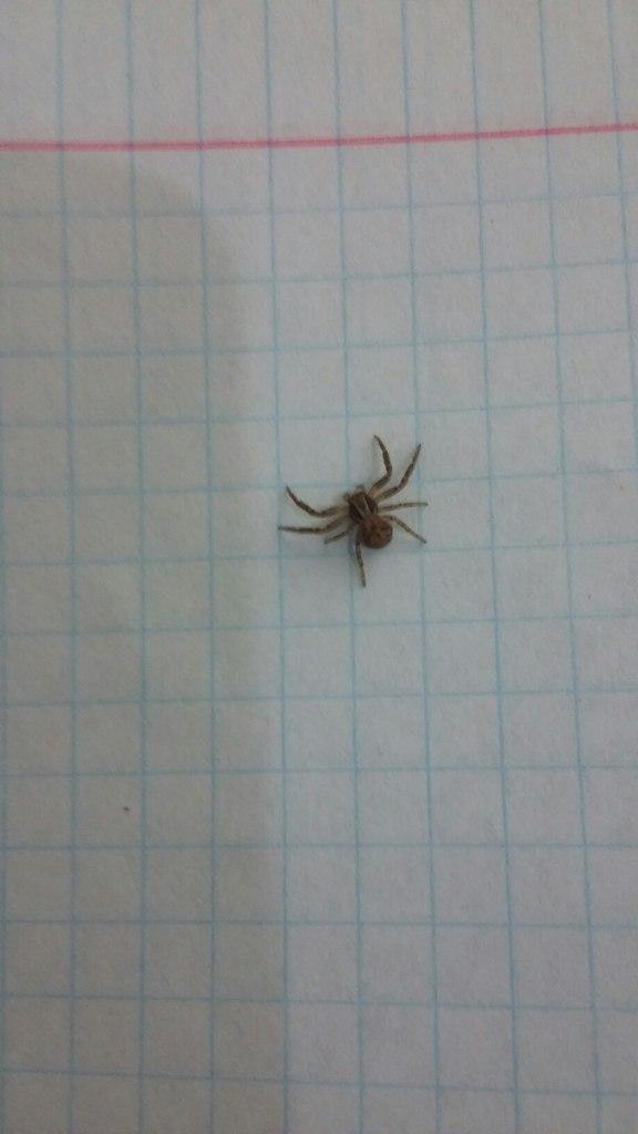 пауки маленькие фото