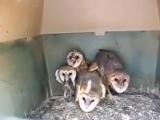 True Gangsta Owls.самое чумовое видео про мафию 2015